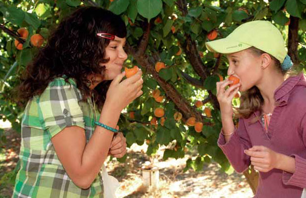 enfants abricots, consommer local