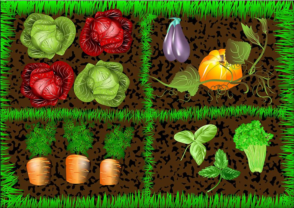 visuel potager, quatre parcelles, légumes