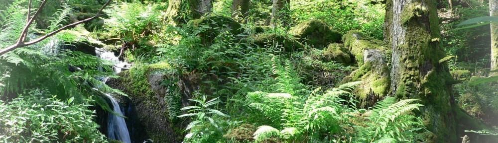 Nature 2050, le projet de la CDC biodiversité s'investit dans les Cévennes